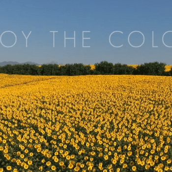Enjoy the colors